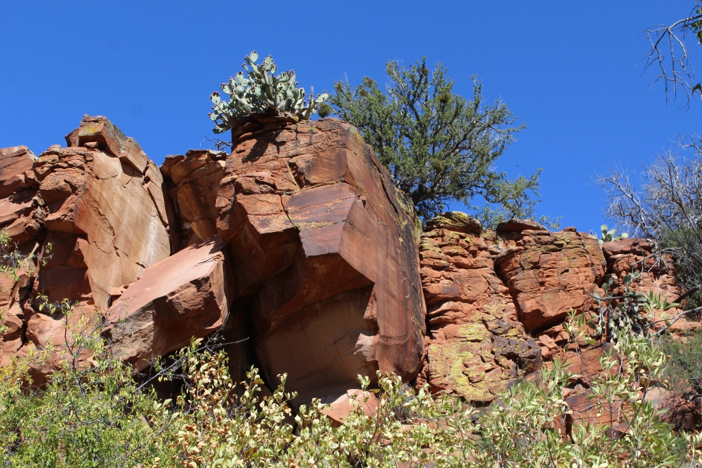 Looking up a prickly pear cactus on the edge of a ledge.
